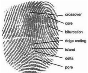 elid-finger-print-02