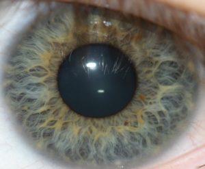 biometric-01